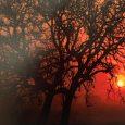 """Otvorenjem izložbe fotografija 15. bjelovarskog salona fotografije """"Šuma okom šumara"""" u petak 10. siječnja u Galeriji grada Krapine započela je ovogodišnja izložbena sezona. Izložba je u Krapini organizirana u suorganizaciji […]"""