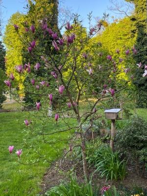 Zlatko Erdelja, Krapina - Josipina magnolija